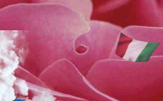 Colore Rosa / Il significato del simbolo dei sogni