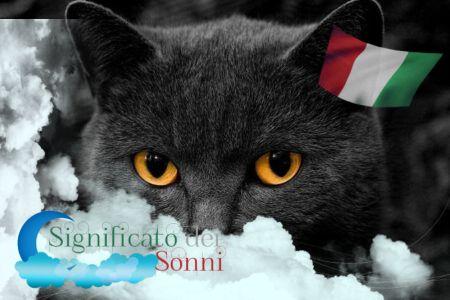 Hai sognato un gatto? Cosa vuol dire sognare un gatto aggressivo o nero