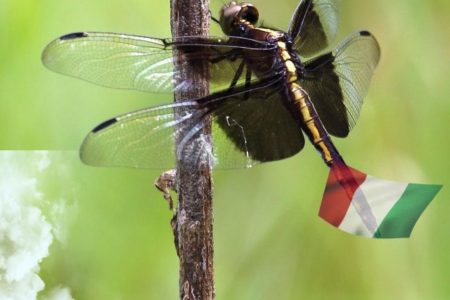 Significato di sognare gli insetti