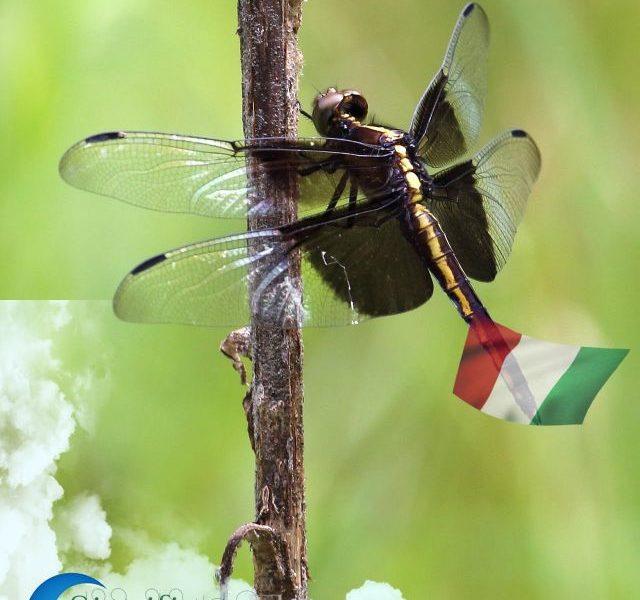 significato-di-sognare-gli-insetti