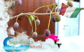significato-di-sognare-olive