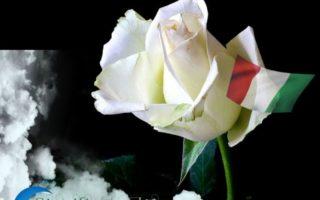 sognando-i-fiori-bianchi-e-il