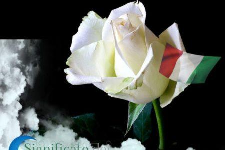 Sognando i fiori bianchi e il loro significato