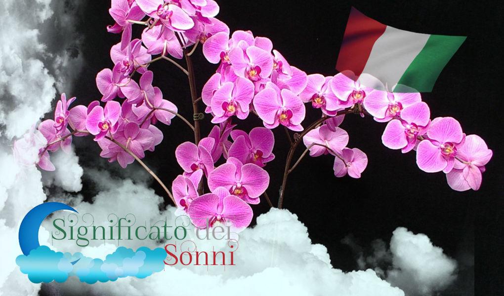 Sognando i fiori / Significato di sognare un fiore