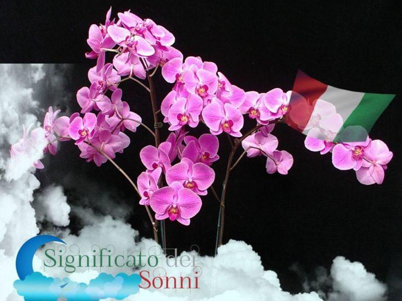 sognando-i-fiori-significato-di-sognare