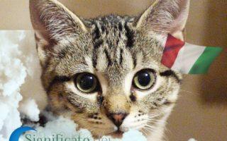 Sognando i gatti - Cosa significa