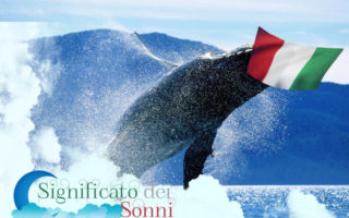 sognando-le-balene