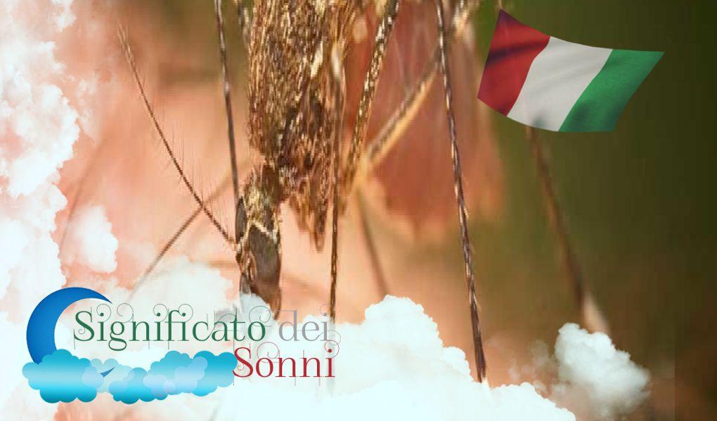 Sognando mosche e zanzare