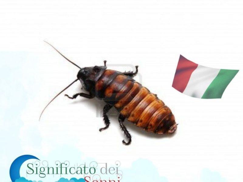 sognare-scarafaggi
