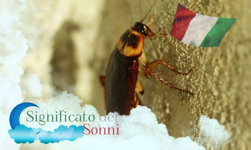 Sogni sugli scarafaggi - Significato e interpretazione