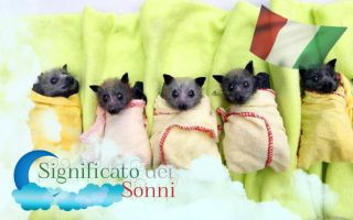 Sogni sui pipistrelli - Interpetazione e significato