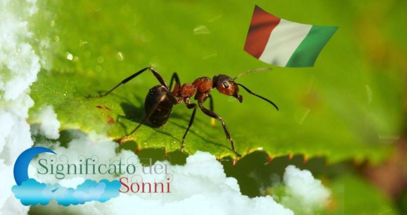 Sogni sulle formiche - Significato e interpretazione