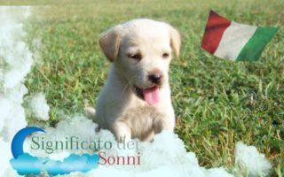 Sogno di cuccioli: Cosa rende questo speciale
